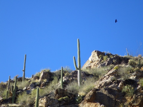 Raven in the canyon