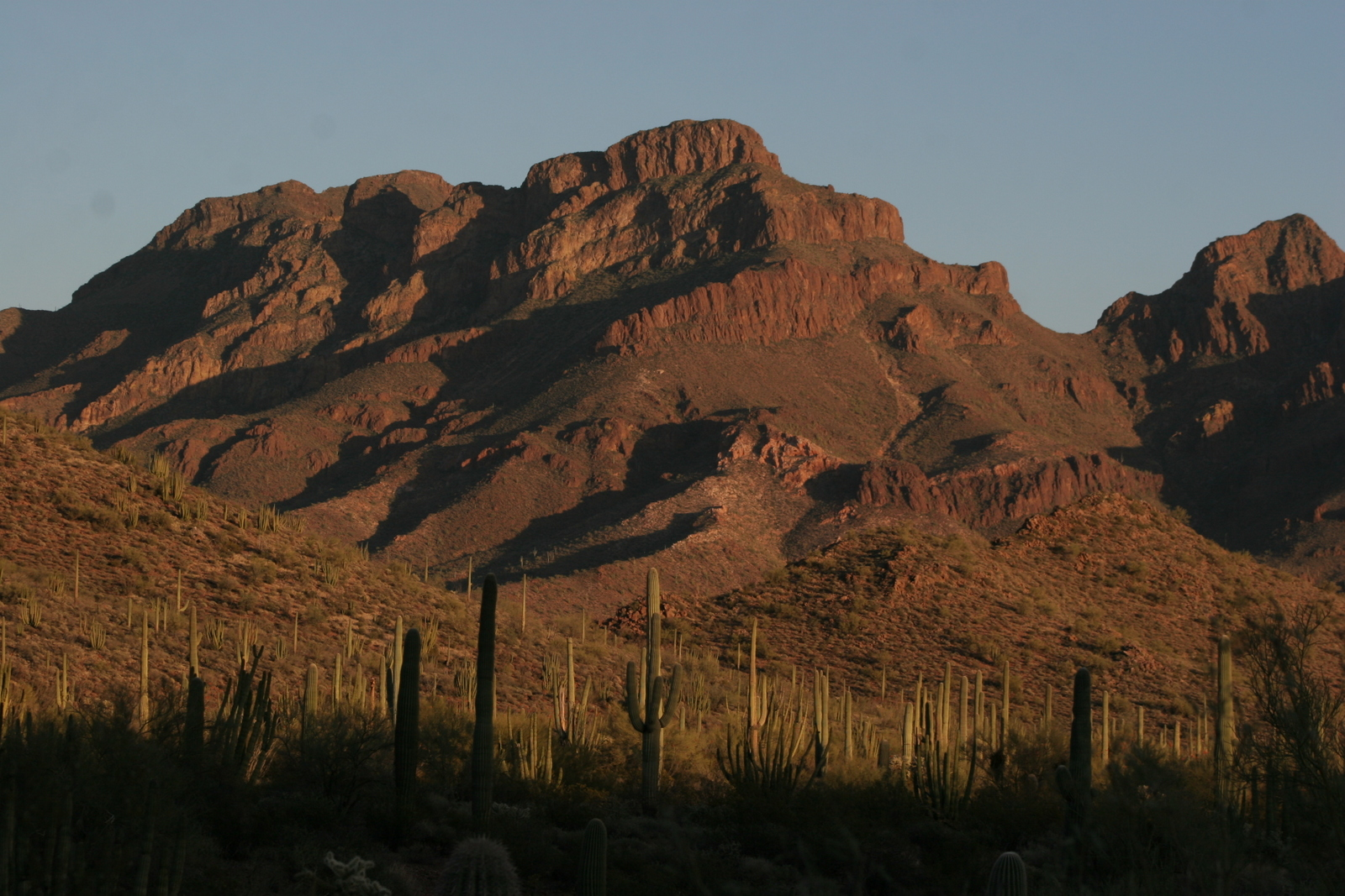 Saguaros and Diaz Peak