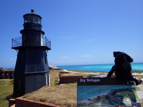 Echo was bringing the CHAOS to Dry Tortugas National Park.