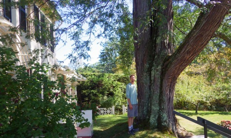 Scott with a huge honeylocust